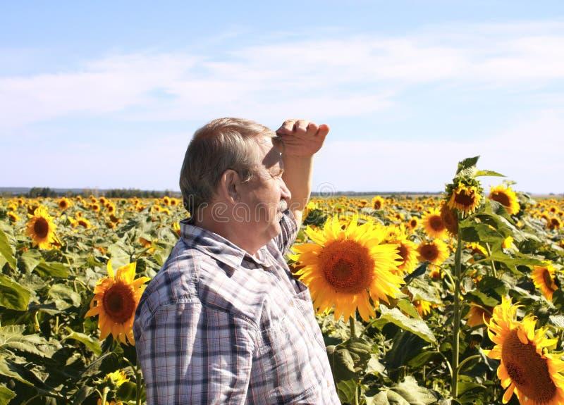 Bejaarde landbouwer en zonnebloemen stock fotografie