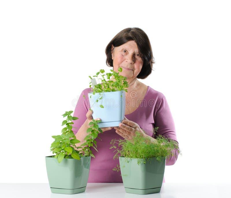 Bejaarde met kruidzaailingen in potten royalty-vrije stock foto's