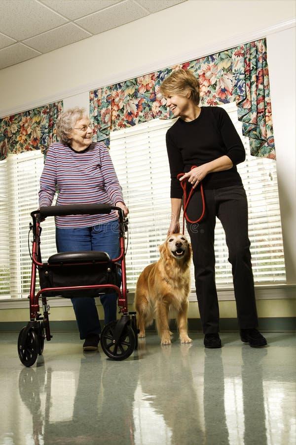 Bejaarde met vrouw het lopen hond op middelbare leeftijd. stock foto's