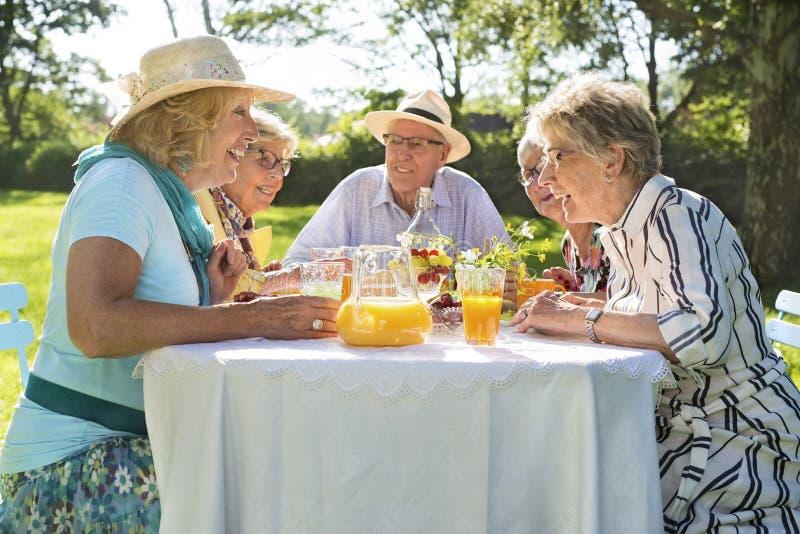 Bejaarde vrienden die picknick in park op een zonnige dag hebben royalty-vrije stock foto's