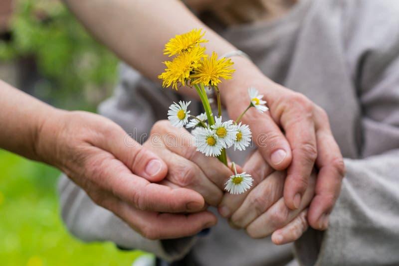 Bejaarde zorg - handen, boeket stock fotografie