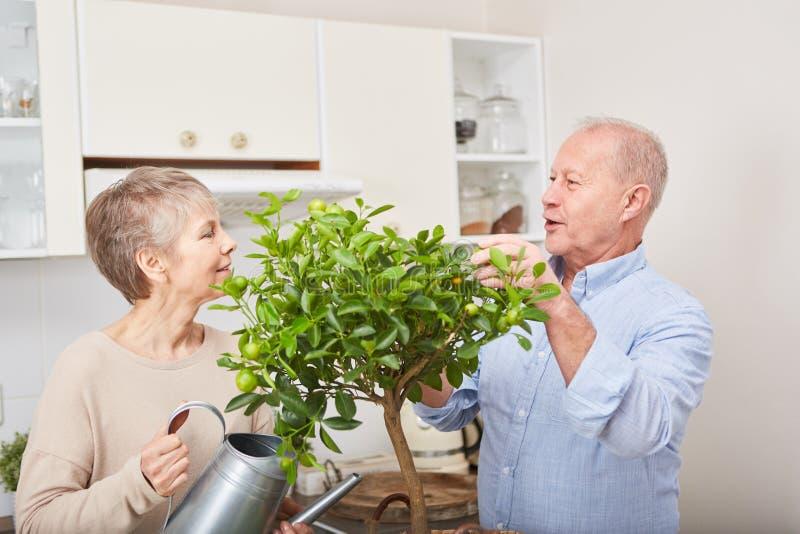 Bejaarden die voor vrije tijd in keuken tuinieren royalty-vrije stock foto