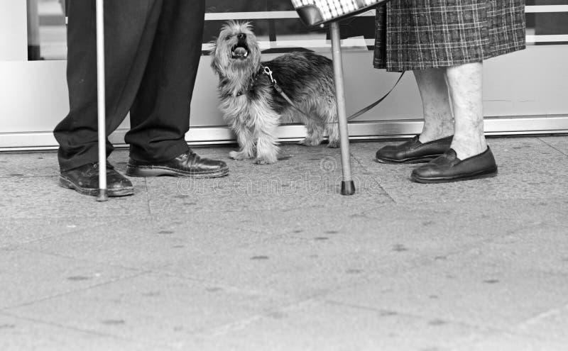 Bejaarden met een hond stock foto