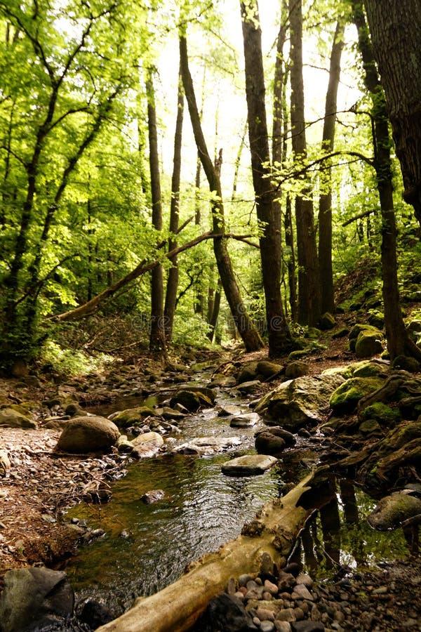 Beken in het bos royalty-vrije stock afbeelding