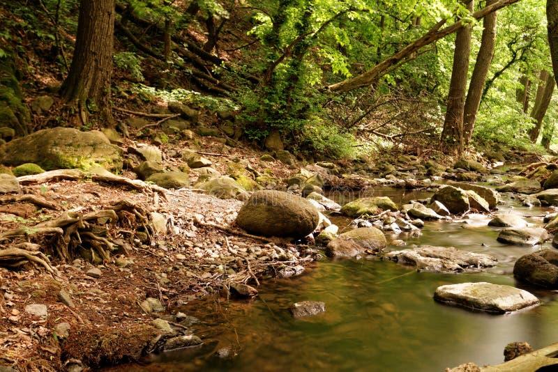 Beken in het bos stock foto's