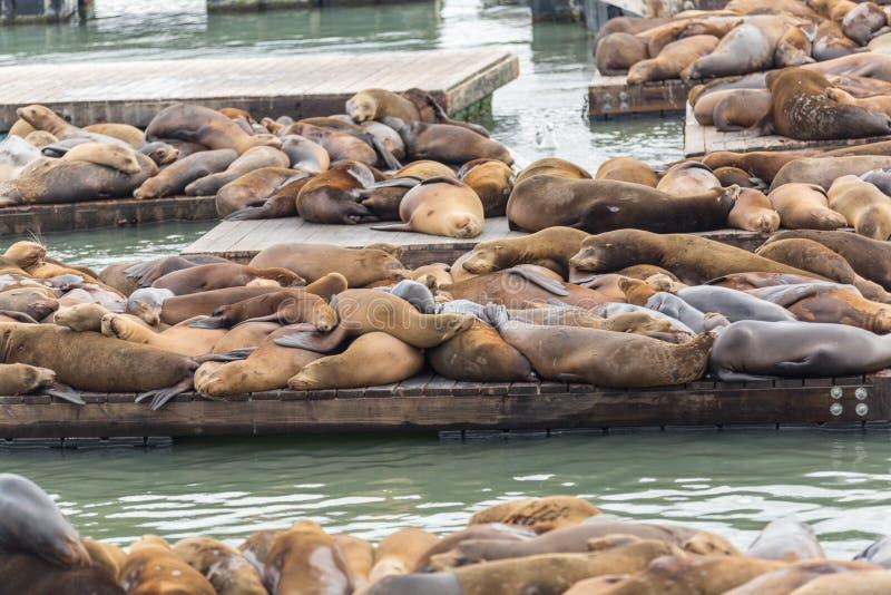 Bekende Pijler 39 in San Francisco met zeeleeuwen De dieren worden verwarmd op houten platforms royalty-vrije stock foto