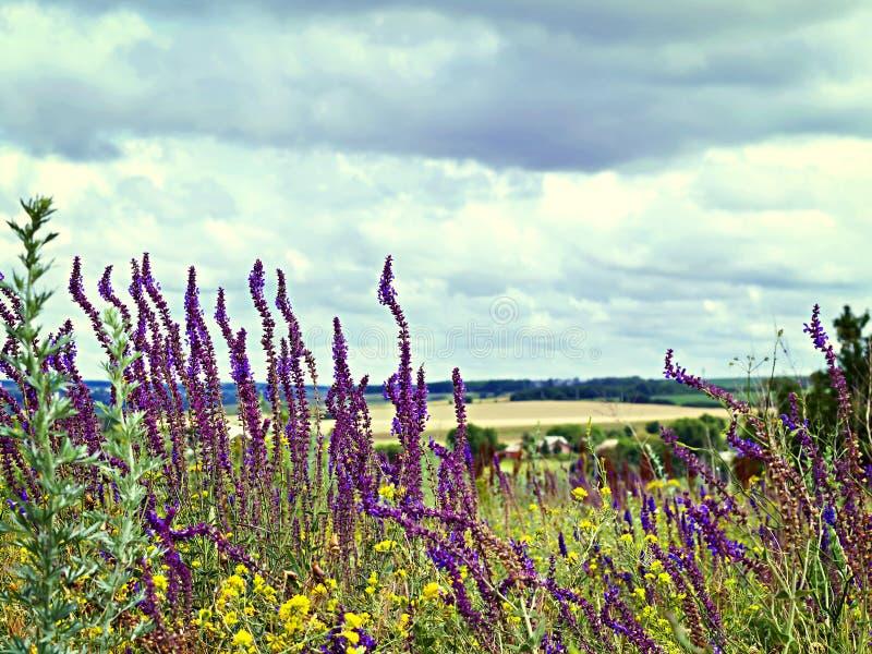 Bekijk de hemel door het groene gras met roze bloemen stock afbeelding