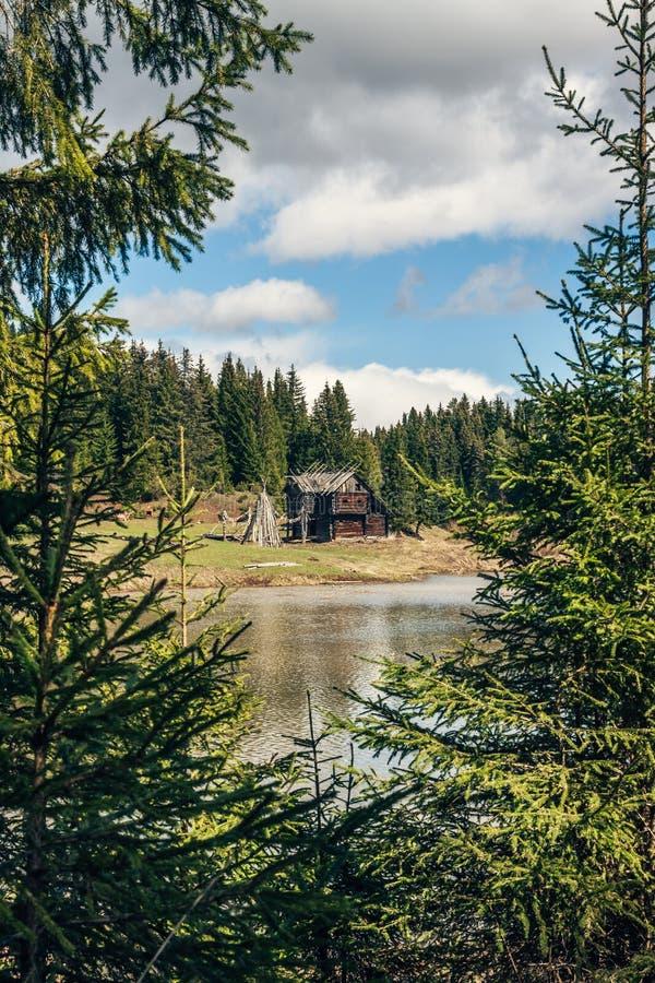 Bekijk het oude verlaten houten huis en de kust van een vijver door takken van spar royalty-vrije stock foto's