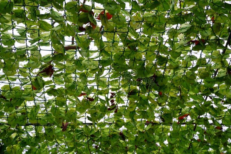 Bekijk omhoog het mooie boomplafond als achtergrond in restaurant royalty-vrije stock foto