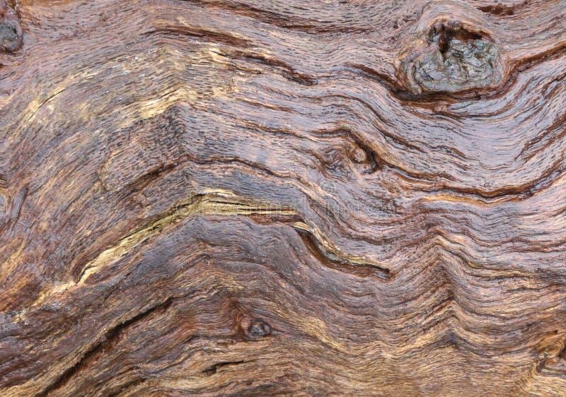 Bekijk wauw patern op deze mooie boomstam royalty-vrije stock foto