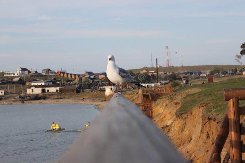 Bekijkend de zeevogel, wat schijnt te denken royalty-vrije stock fotografie