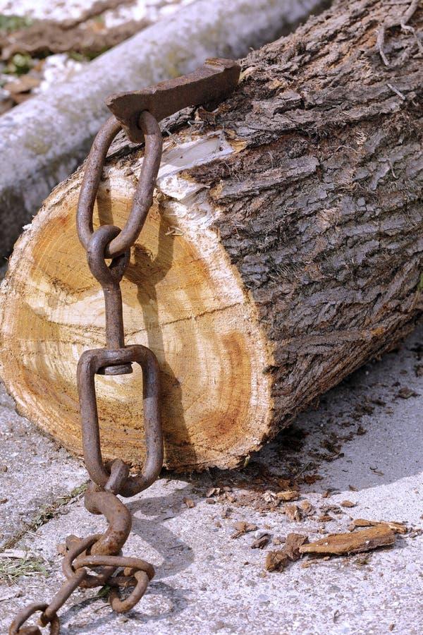 Beknotte die boomboomstam aan een ketting wordt vastgehaakt royalty-vrije stock fotografie