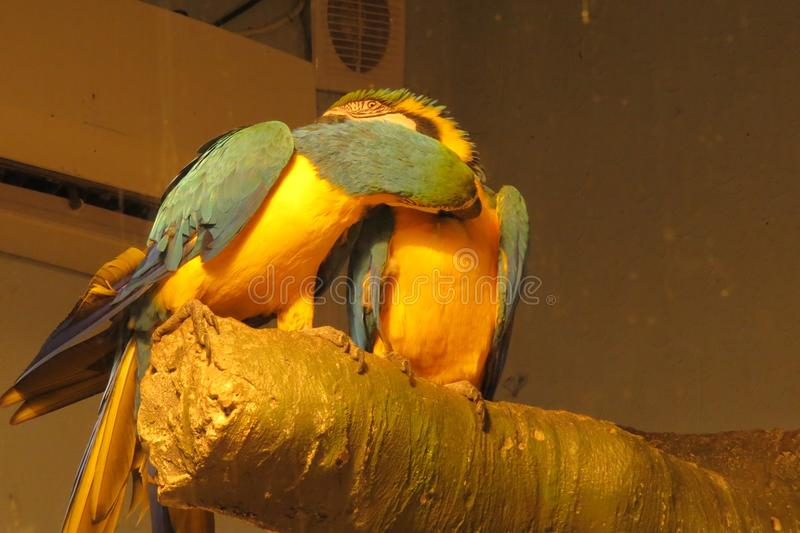 Bekoorde Papegaaien in het park royalty-vrije stock foto