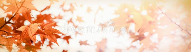 Bekronen de zon` s dat lichte onderbrekingen door de boom ` s - de herfstbladeren door zonlicht worden aangestoken royalty-vrije stock afbeelding