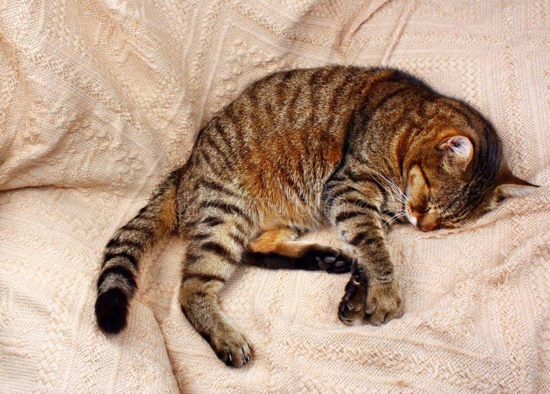 Bekvämt sova katten fotografering för bildbyråer