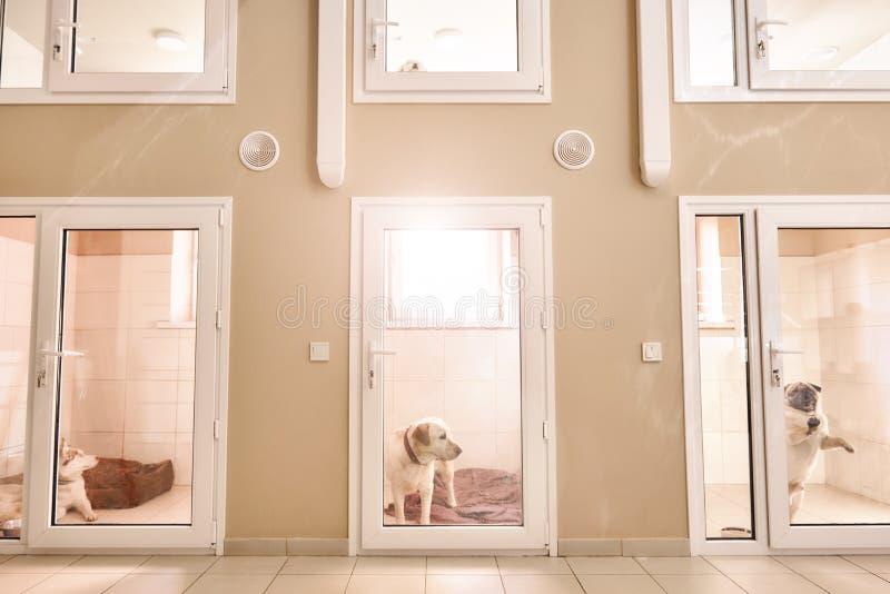 Bekvämt ställe för varje patient Foto av rum med olika djur inom för att hålla husdjur på den veterinär- kliniken royaltyfri fotografi