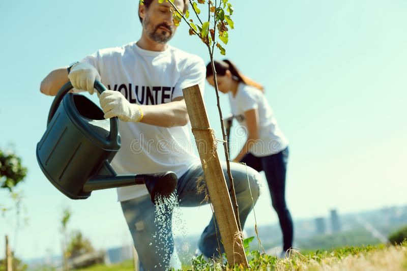 Bekwame tuinman die jonge boom gieten royalty-vrije stock foto