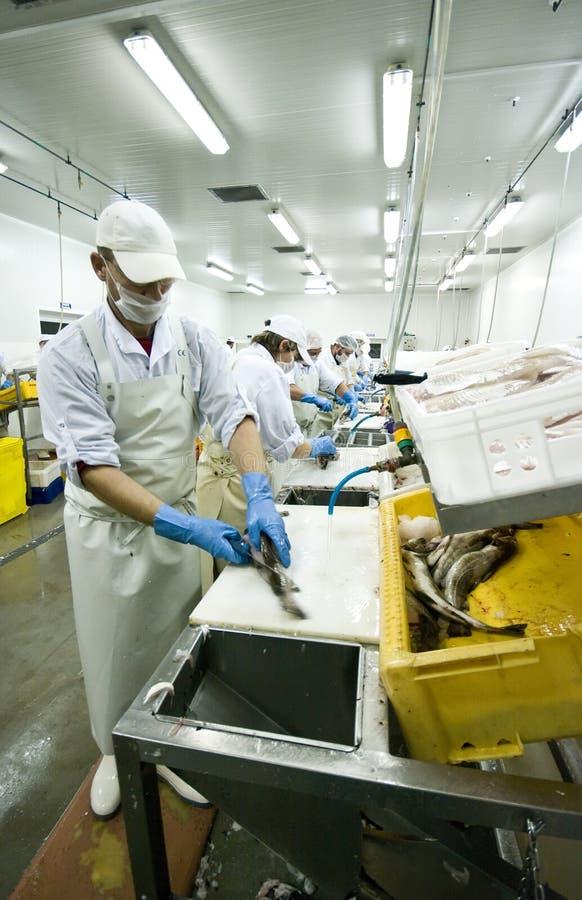 Bekwame vissensnijder royalty-vrije stock foto