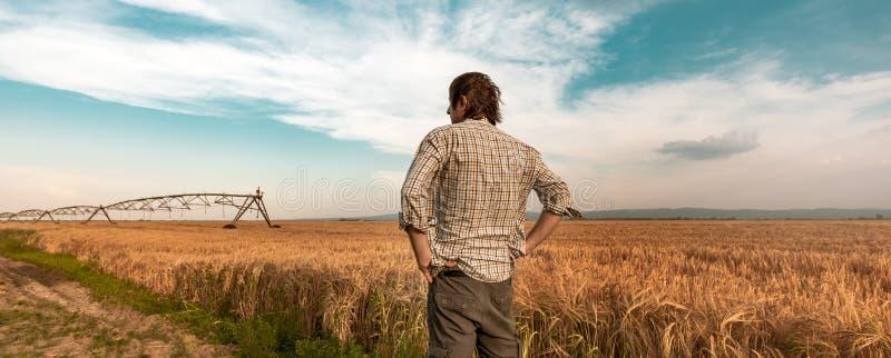 Bekymrad bonde i kornfält på en blåsig dag royaltyfri bild