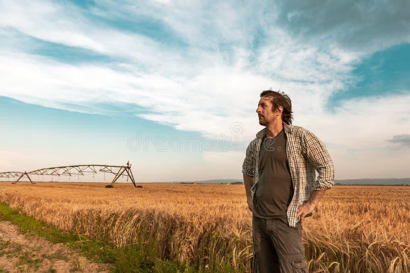 Bekymrad bonde i kornfält på en blåsig dag royaltyfria bilder