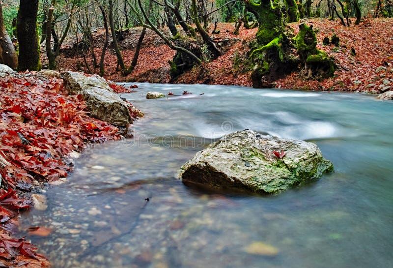 Bel écoulement d'eau de courant en automne images stock