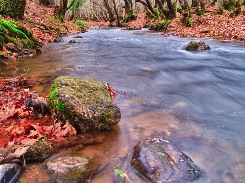 Bel écoulement d'eau de courant en automne image libre de droits
