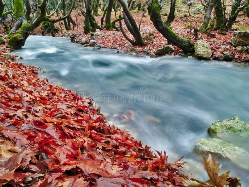 Bel écoulement d'eau de courant en automne photo libre de droits