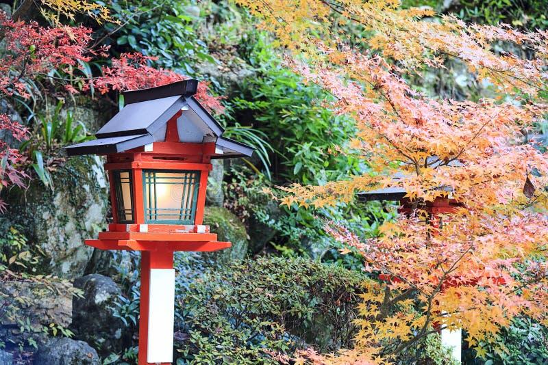 Bel érable au Japon image libre de droits