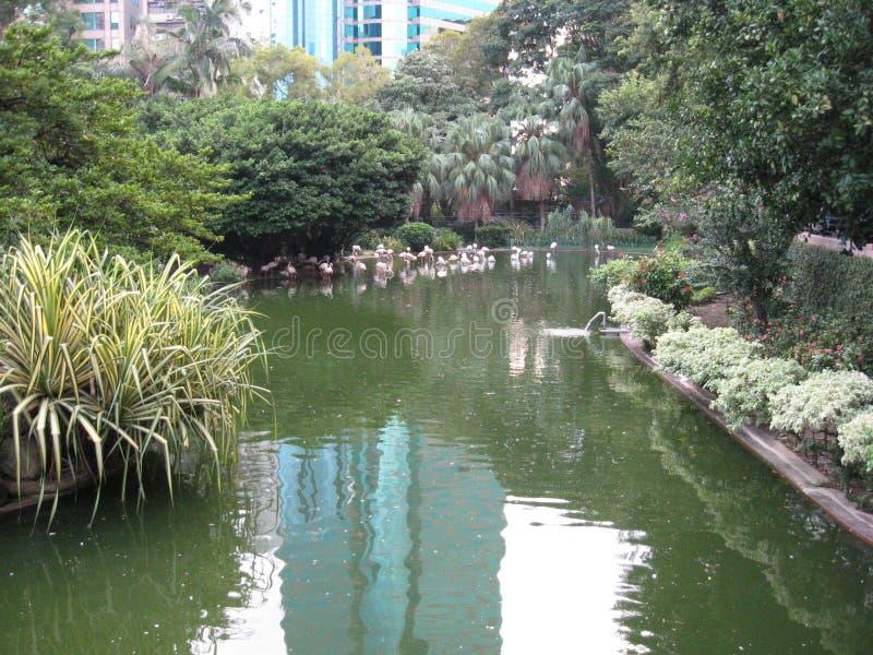 Bel étang à poissons en parc de Kowloon, Hong Kong image stock