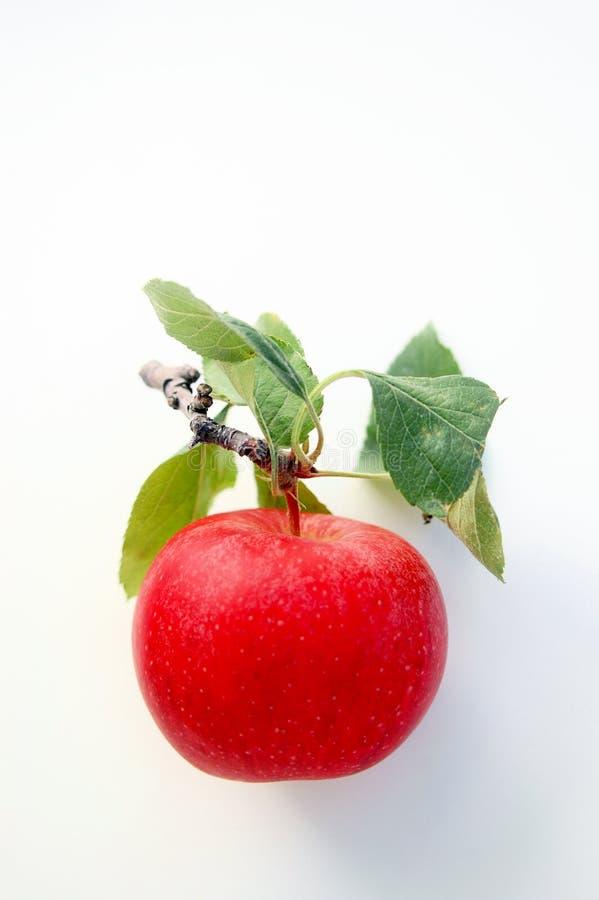 Bel Apple rouge photos libres de droits