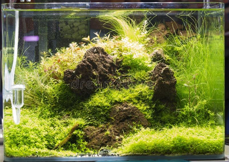 Bel aquarium d'eau douce planté images stock