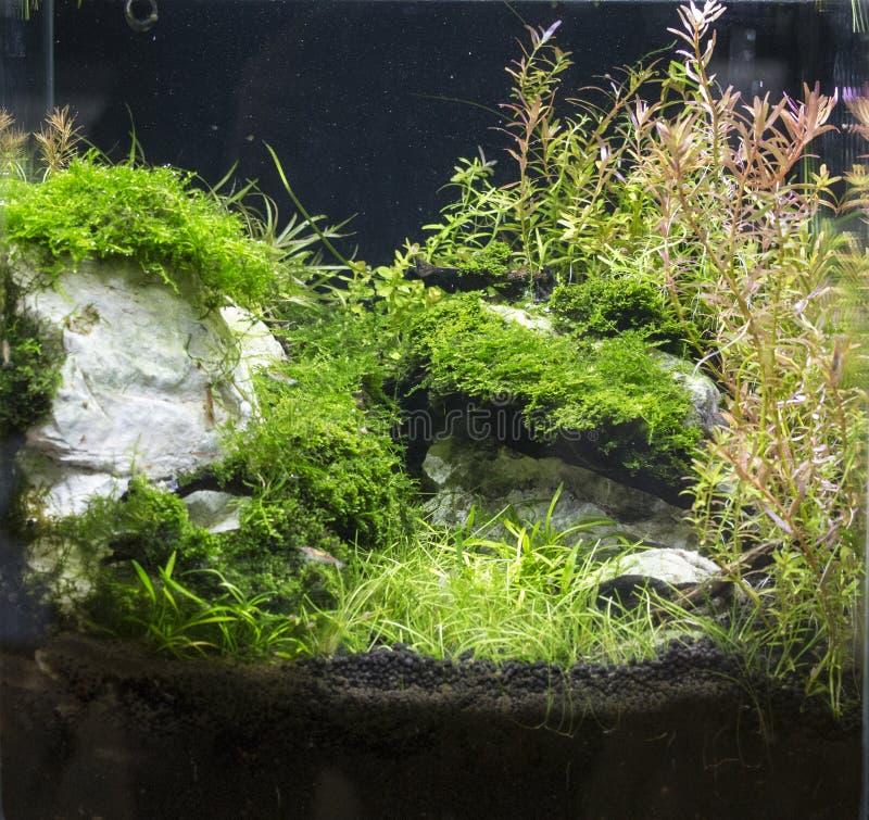 Bel aquarium d'eau douce planté image libre de droits