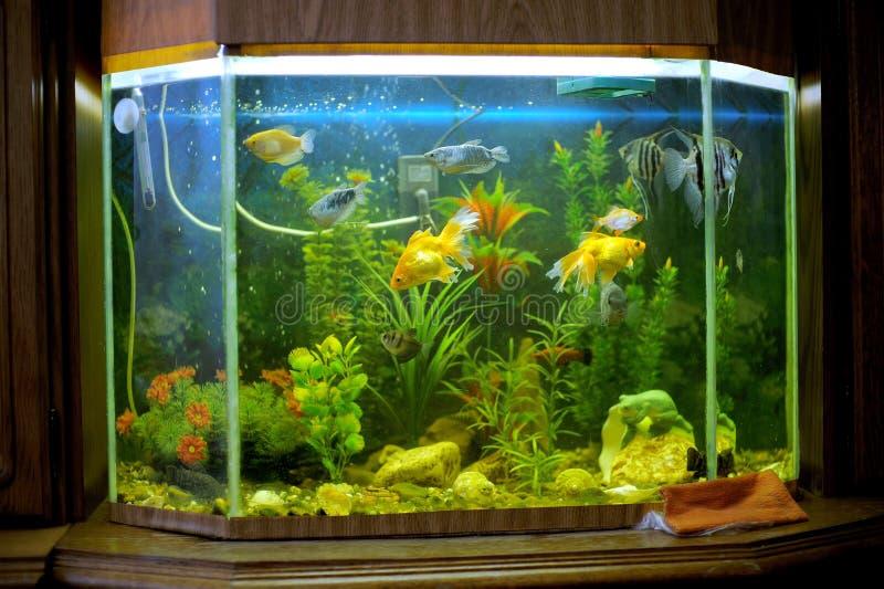 Bel aquarium sur l'étagère photos libres de droits