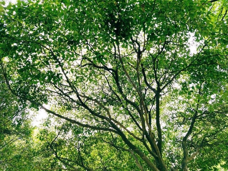 Bel arbre photographie stock