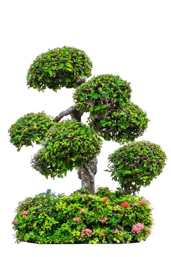 bel arbre décoratif d'isolement sur le blanc photo stock