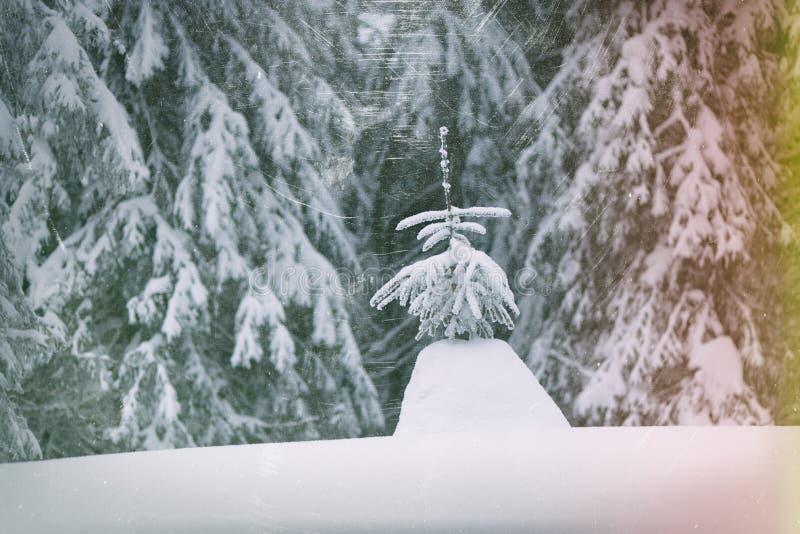Bel arbre dans la forêt d'hiver images stock