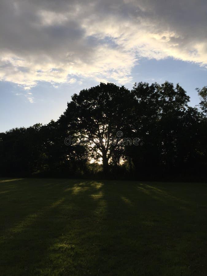 Bel arbre de coucher du soleil photographie stock libre de droits
