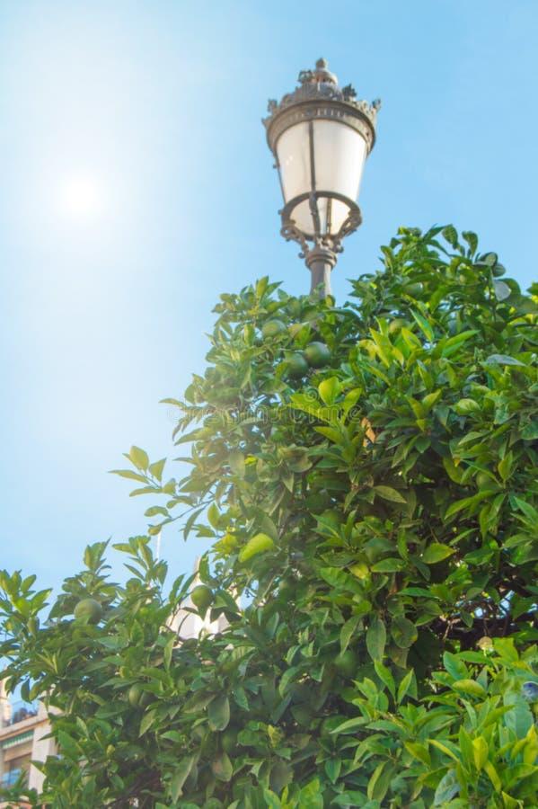 Bel arbre de lampadaire et de mandarine sur le fond du ciel bleu avec la lumière du soleil, un espace de copie photos stock