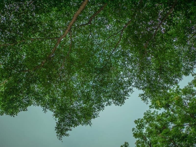 Bel arbre de silhouette sur le ciel bleu photographie stock