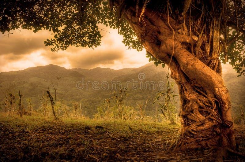 Bel arbre empêtré image libre de droits