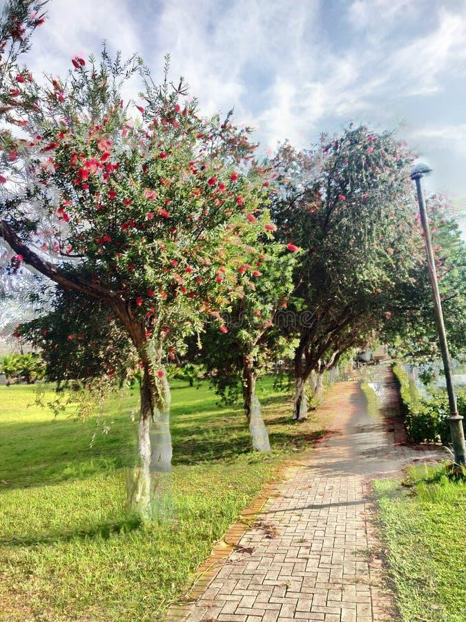 Bel arbre et belle vue de ciel au matin images libres de droits