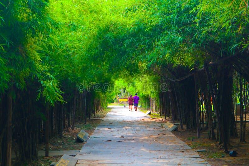 Bel arbre et tunnel en bambou en parcs publics fond et papier peint photo stock