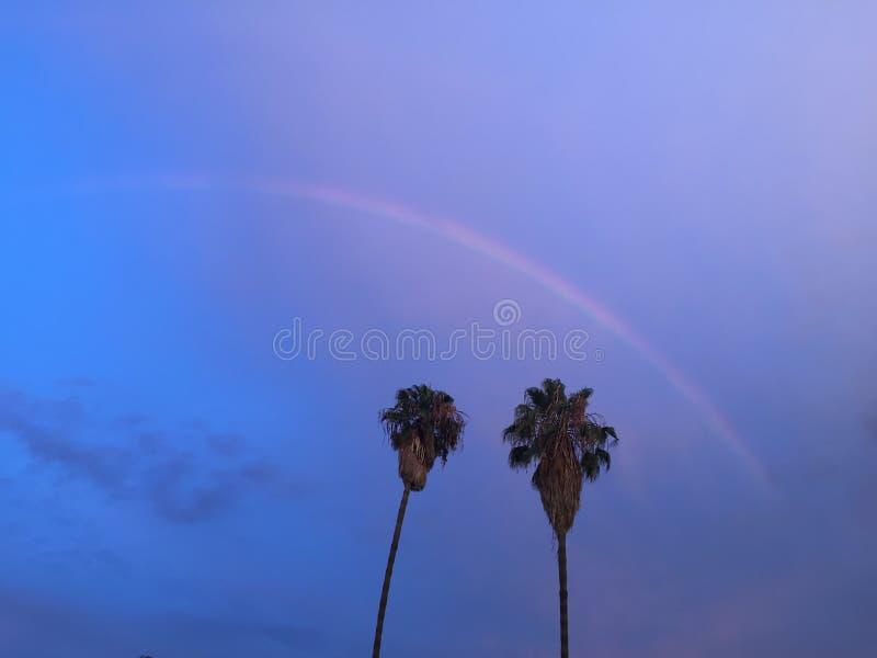 Bel arc-en-ciel au-dessus des palmiers photo stock