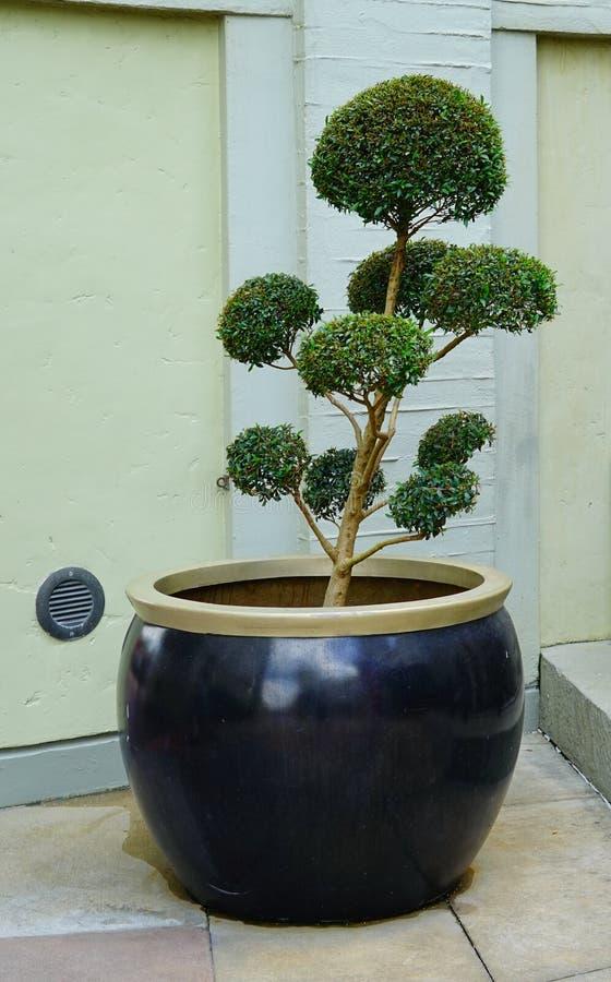 Bel art d'arbre image libre de droits