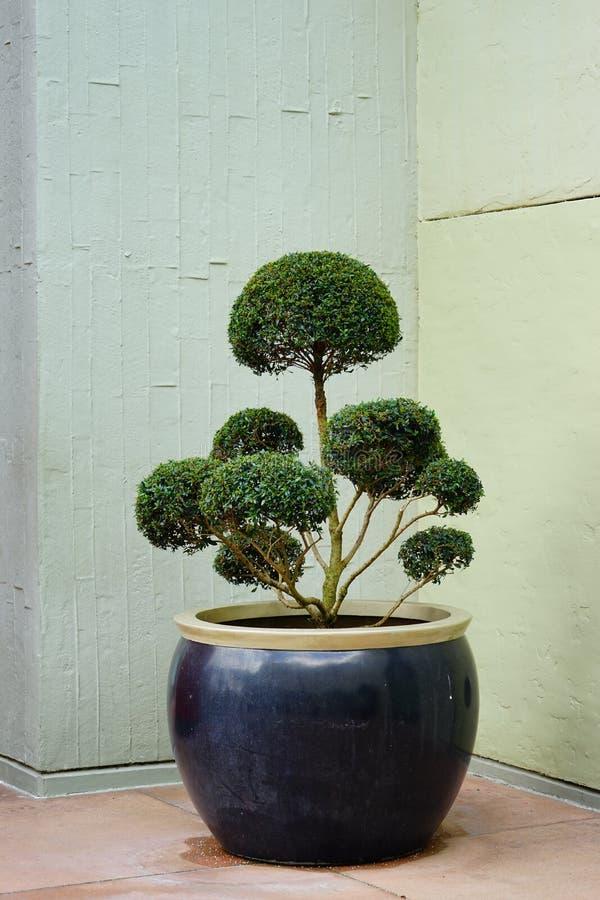 Bel art d'arbre photos libres de droits