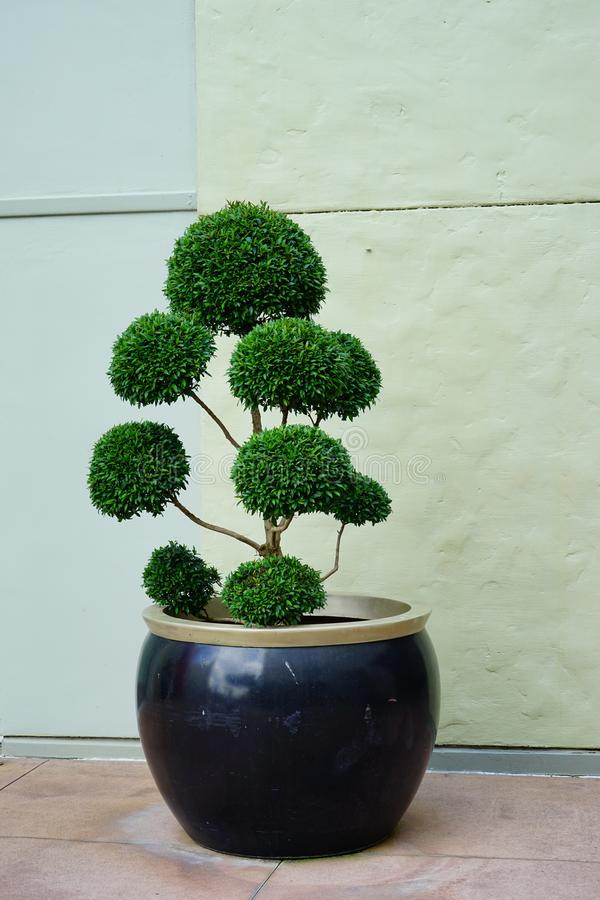 Bel art d'arbre images libres de droits