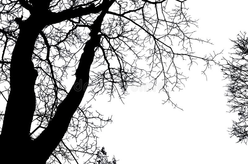 Bel art des branches de manque d'arbre dénudé sur le fond blanc photos libres de droits
