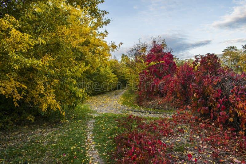 Bel automne romantique avec les arbres lumineux et la lumière du soleil image libre de droits