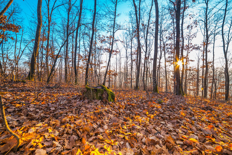 Bel automne sur une montagne avec la cuvette brillante du soleil les bois photos stock