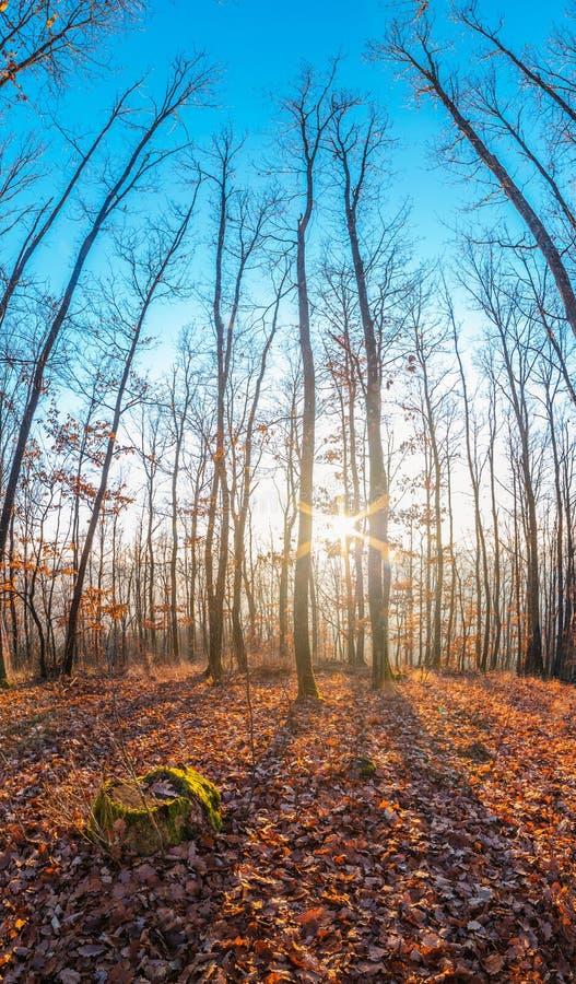 Bel automne sur une montagne avec la cuvette brillante du soleil les bois photographie stock